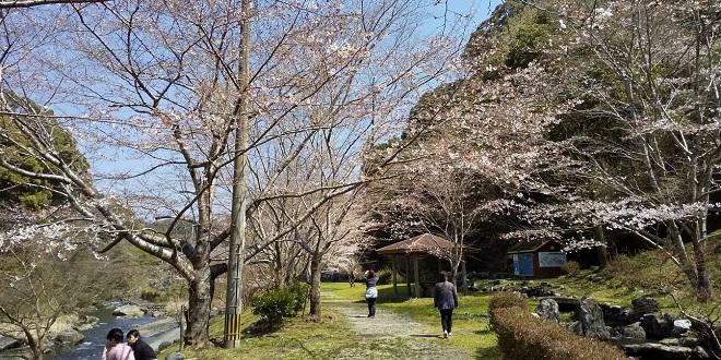 桜観音滝.JPG